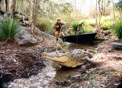 crocodile hunter k