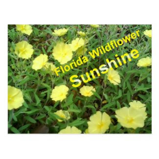 Florida Wildflower Sunshine Postcard