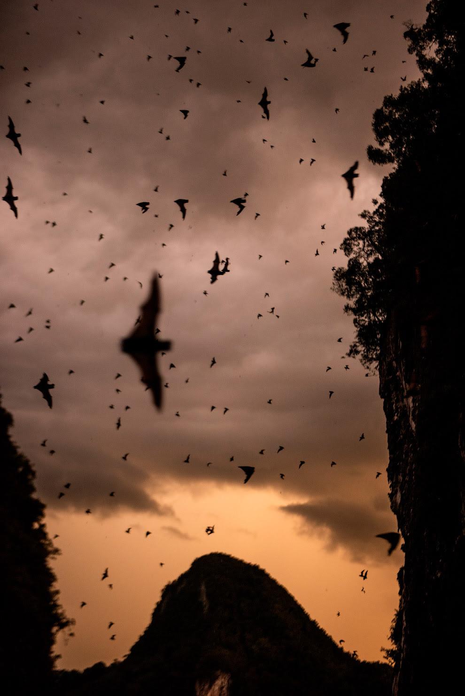 В оленьей пещере Борнео обитают более двух миллионов летучих мышей