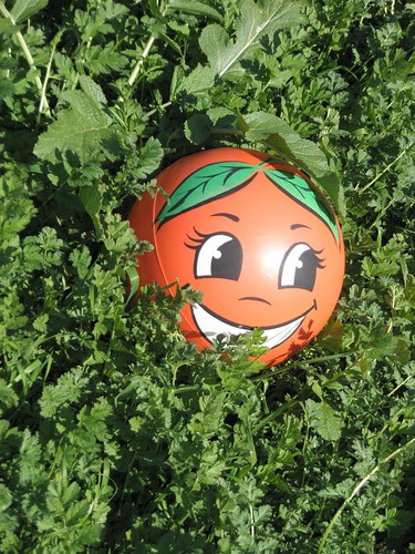 miss orange in the weeds 4