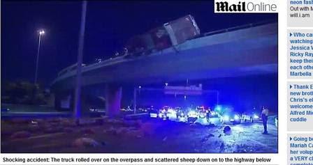 Pendurado no viaduto, caminhão 'despejou' ovelhas sobre os carros