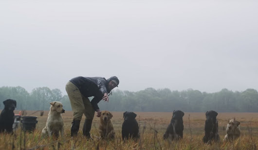 Sitka Films Presents 'Say When' a Must-See For Gun Dog Owners | OutdoorHub