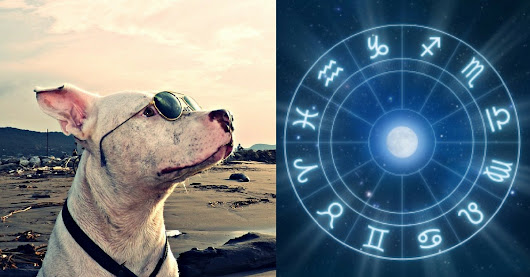 According To Your Zodiac, This Is The Type Of Dog You Would Be
