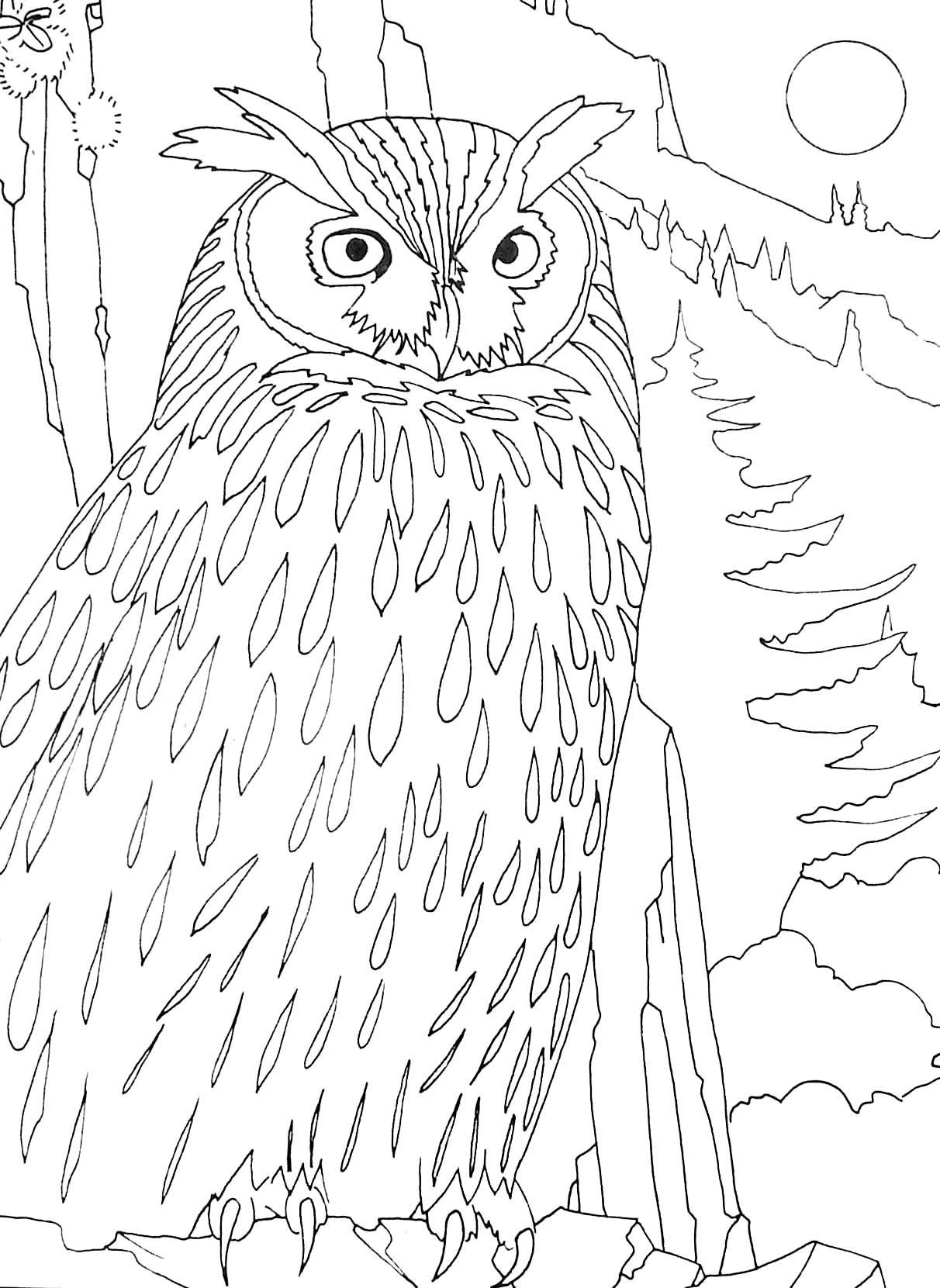 Coloriage d oiseau nocturne hibou grand duc