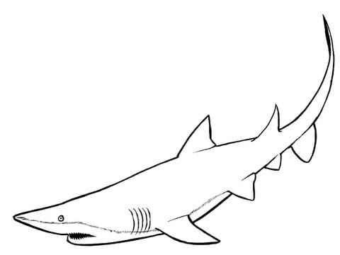 Nurse Shark coloring page | Free Printable Coloring Pages