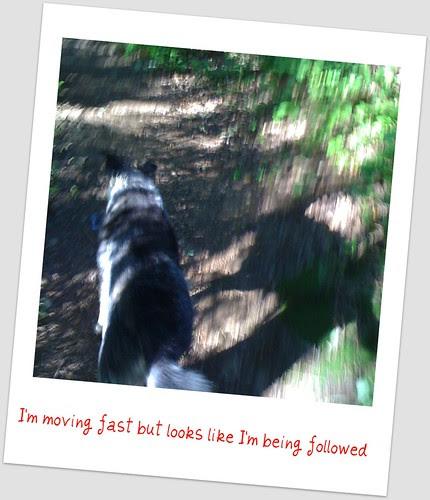 shadow walk- two