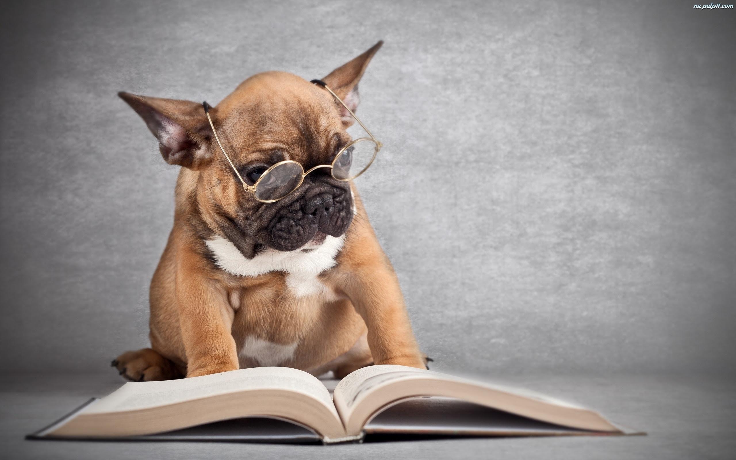Znalezione obrazy dla zapytania książki pies