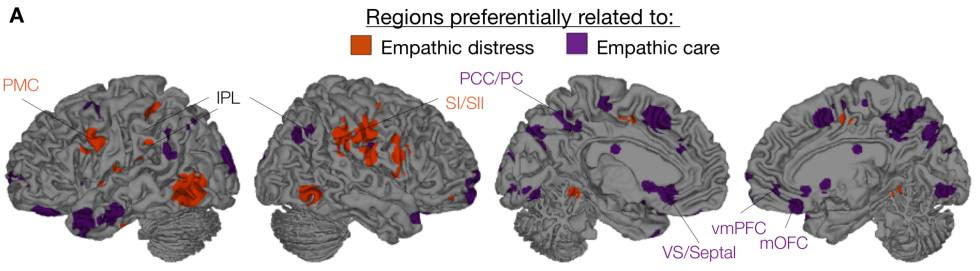 Los dos tipos de empatía emocional, la compasiva y la angustia, activan diferentes zonas del cerebro.