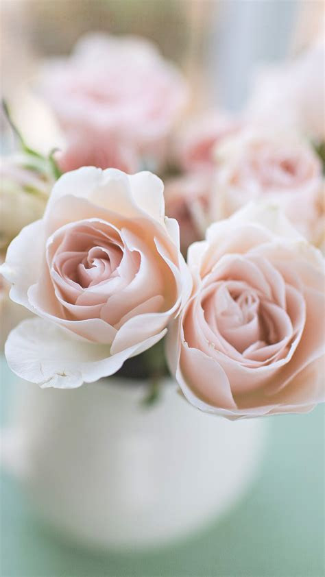 pale pink rose wallpaper