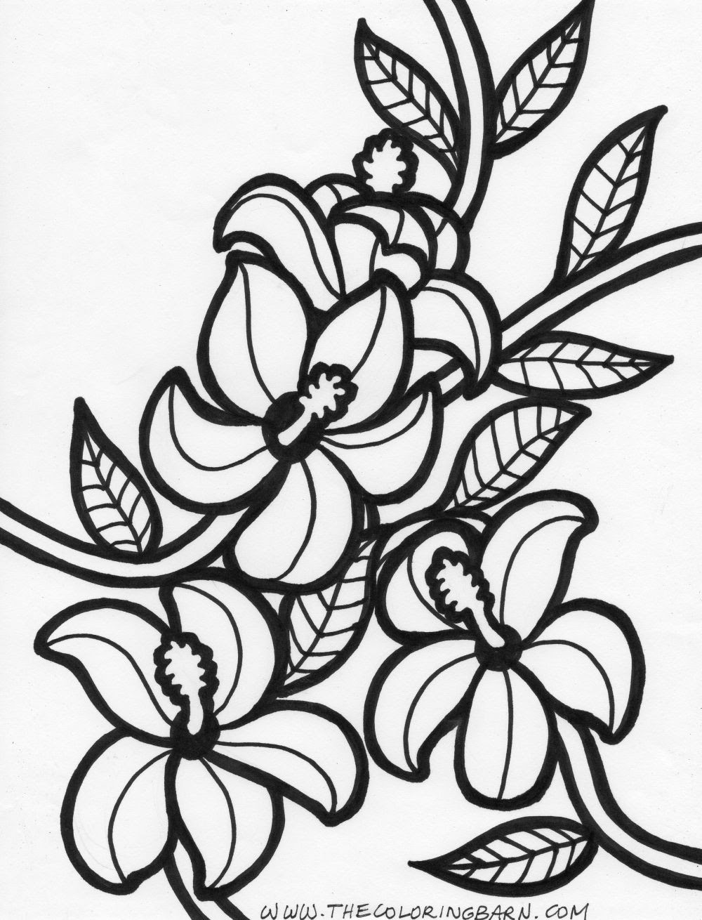 The Best Free Hawaiian Coloring Page Images Download From 374 Free