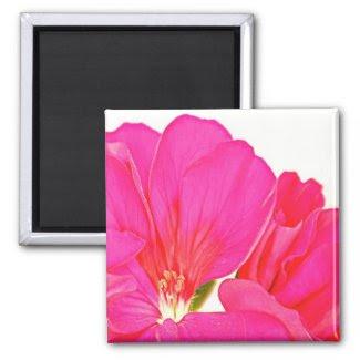 Pink Geranium magnet