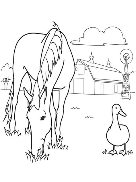 printable horse coloring pages  kids jameson