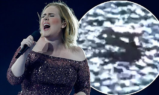 Adele flashes audience after a bug crawls into her shoe