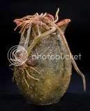 Alien Egg