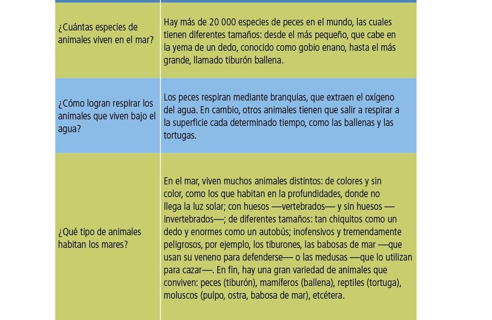Libro De Español De Sexto Grado Contestado - Libros Favorito