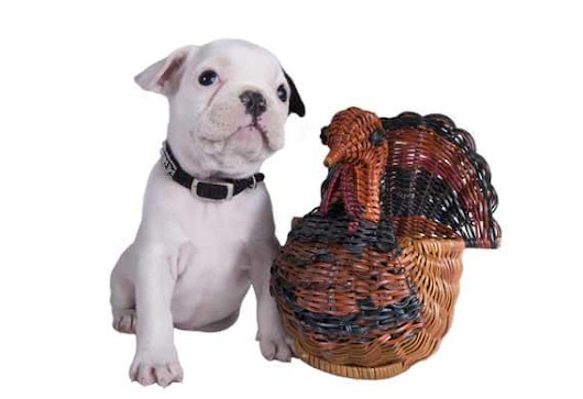 Top Ten Tips for Feeding Pets Thanksgiving Leftovers
