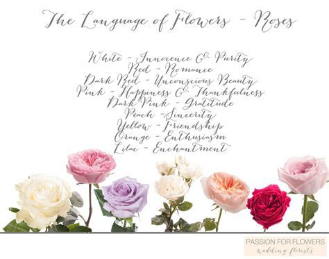 The Language of Flowers ? Flower Meanings ? Passion for