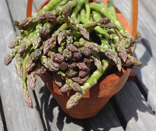 Fresh, organic, local asparagus by Eve Fox, Garden of Eating blog