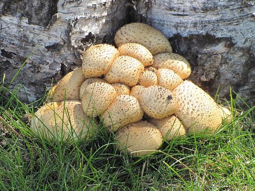 The Fungus Among Us #1