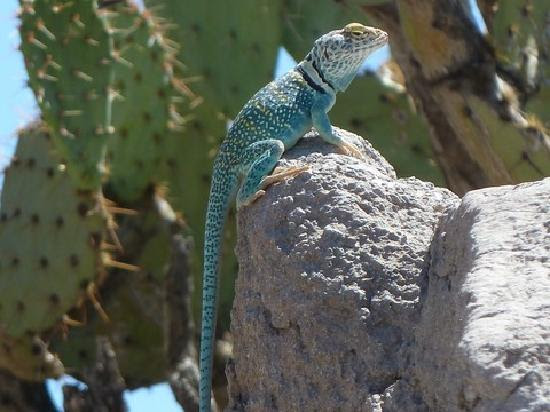 Photos of Arizona-Sonora Desert Museum, Tucson