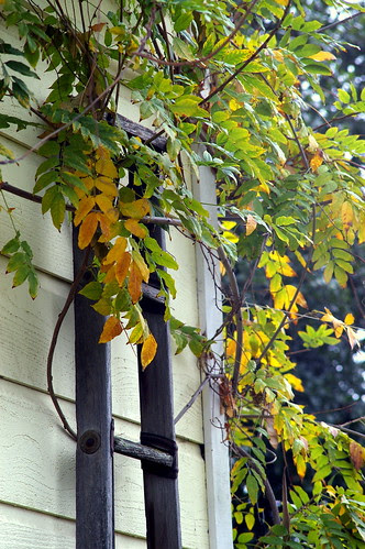 Neighbor's old ladder with Schneider 135mm f/3.5