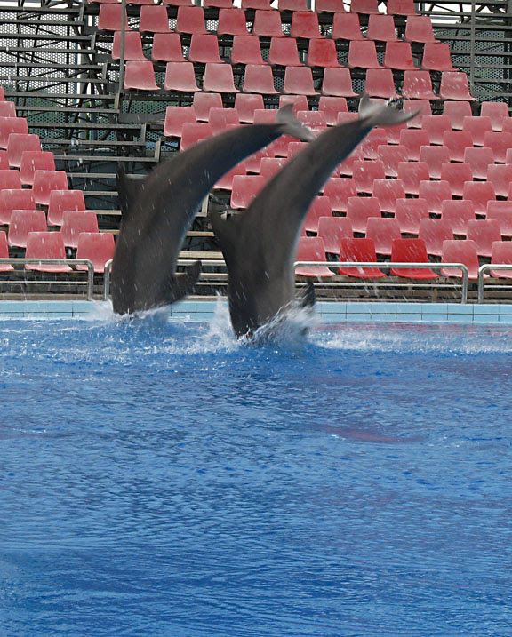 dauphins3