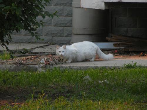 Cats in Shenyang, China _ 9931