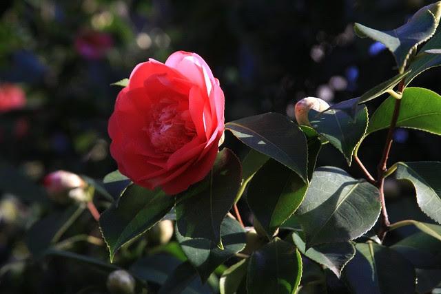flowers 2/28/08