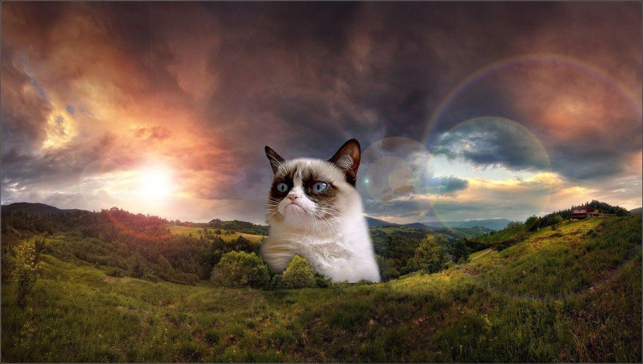 Grumpy cat wallpaper SF Wallpaper