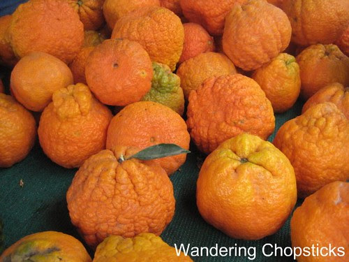 Grapefruit-sized Shasta Gold Tangerines 1