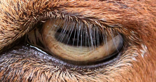 Length of Lashes Keeps Eyes From Drying, Study Finds - NYTimes.com