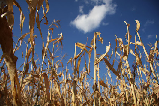 MEPs ask Commission to distinguish 'good and bad' crop-based biofuels