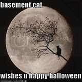BasementCatHalloween.jpg Basement Cat Wishes You Happy Halloween image by voiceomt2002