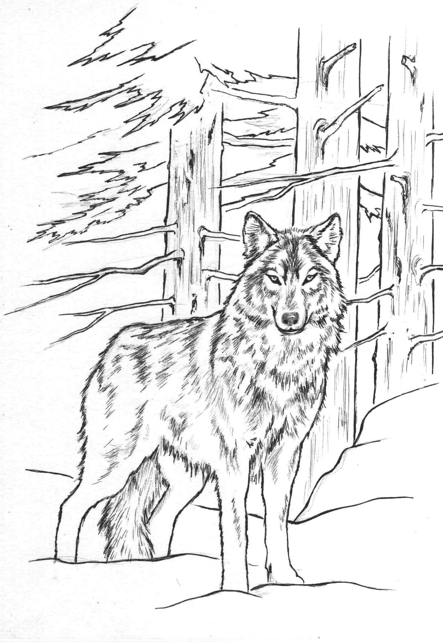 Coloriage Loup 2 Coloriage artistique loup Dessin feutre loup