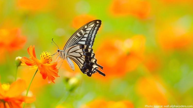 πεταλούδα-4