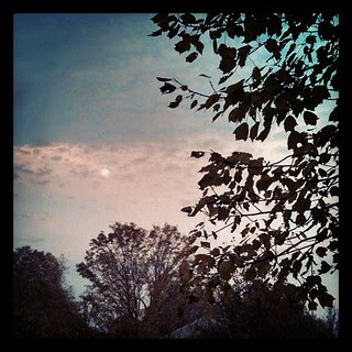Gorgeous #sky #moon last night #fall #trees #newengland
