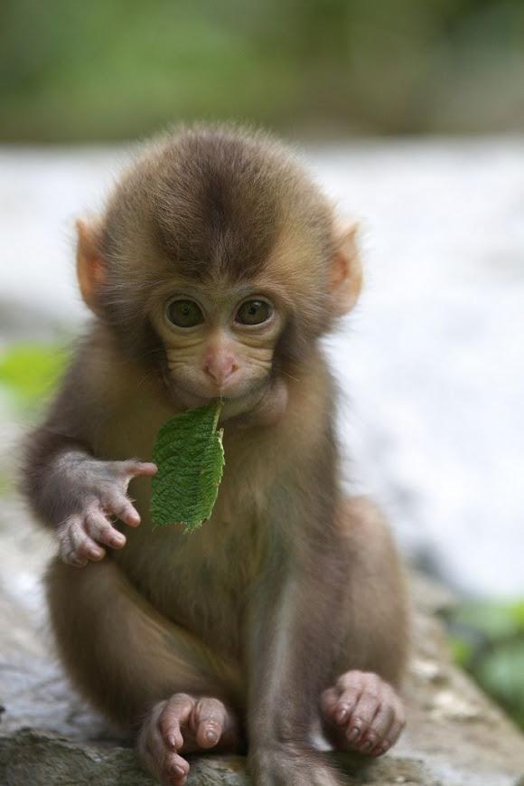 Божевильний игровой автомат crazy monkey мавпочки Нефтеюганск