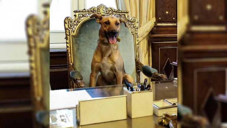 Resultado de imagen para rodriguez larreta perro