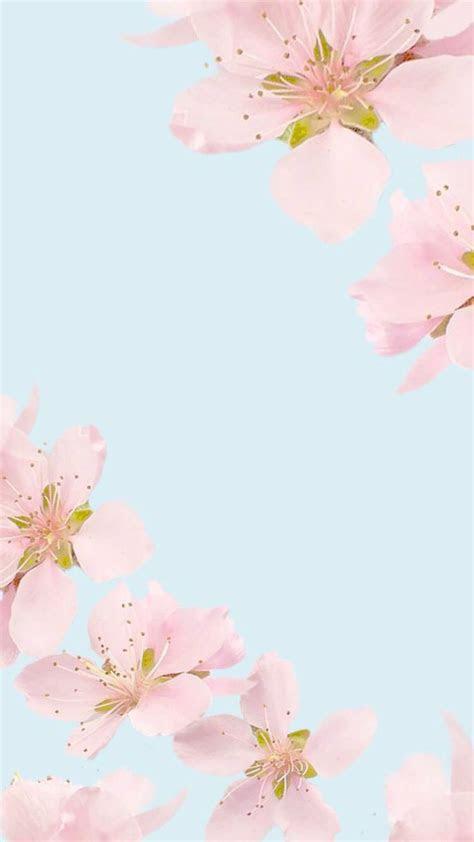 mint tumblr  images floral wallpaper iphone plain wallpaper iphone backgrounds phone