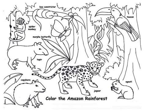 amazon rainforest animals coloring page  print