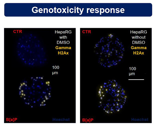 Poster – Characterisation of 3D cultured primary human hepatocytes and HepaRG for DMSO-free preclinical toxicity testing