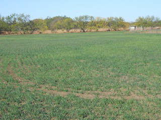 Wheat 2012 Nov 9