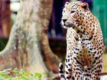 a Leopard entered IIT BOMBAY