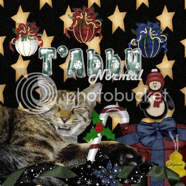Holly Daze,Tabby Cat,Domestic Cat,Penguins,Happy Holidays,Holiday Glitter