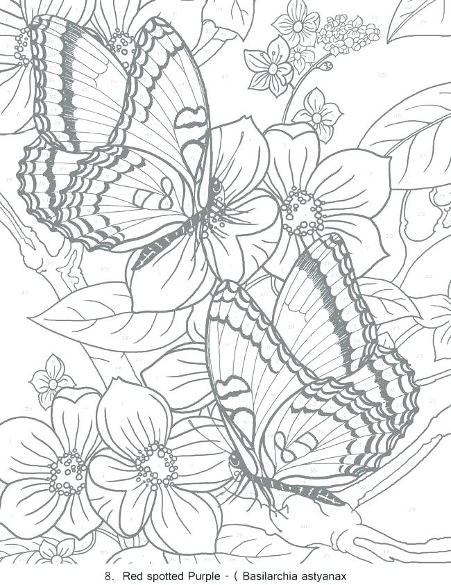 Download Free Printable Coloring Pages For Adults Pdf at GetDrawings | Free download