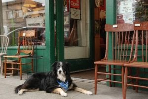 37 Dog-Friendly Store And Restaurant Chains