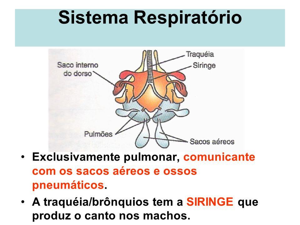 http://slideplayer.com.br/slide/294132/