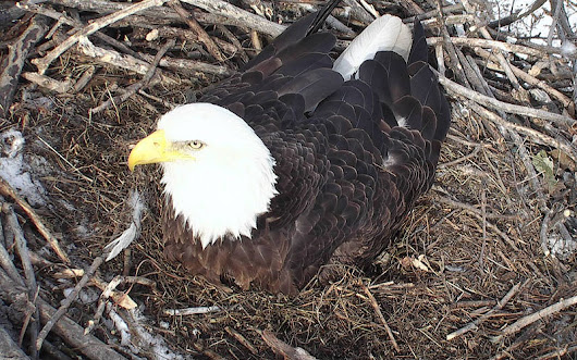 Reasons to Preen: Minnesota's EagleCam