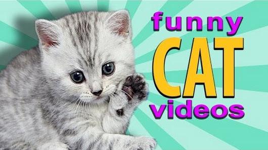 funny cat videos google
