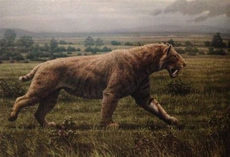 win   fight   saber toothed tiger